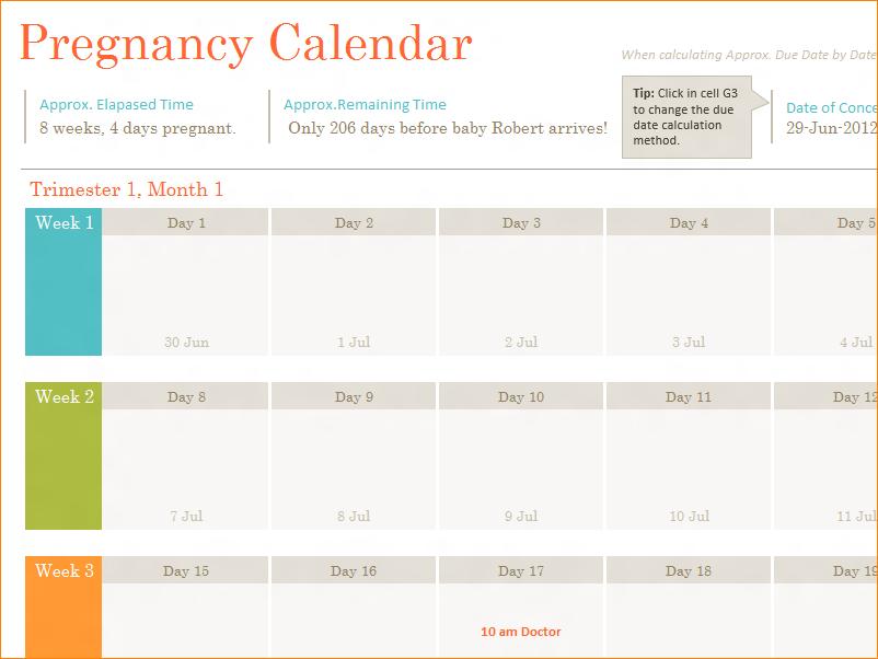 6+ Printable Pregnancy Calendar