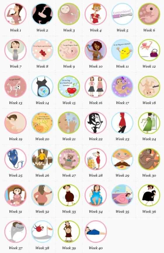1000+ Ideas About Pregnancy Calendar On Pinterest