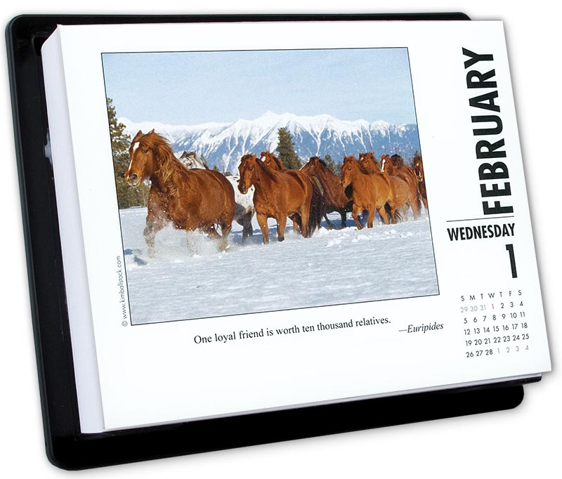 2017 What Horses Teach Us Page