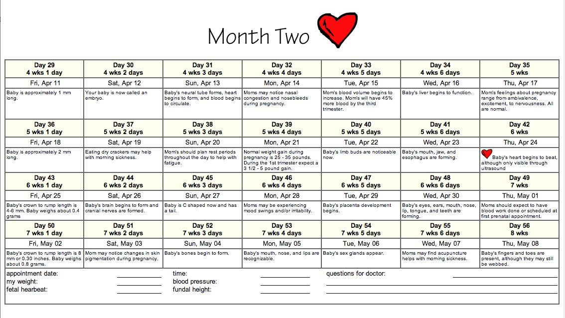 Fet Pregnancy Due Date Calendar