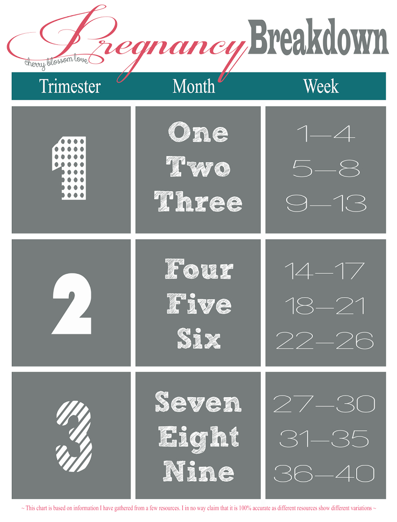 pin on maternity pregnancy trimesters weeks chart