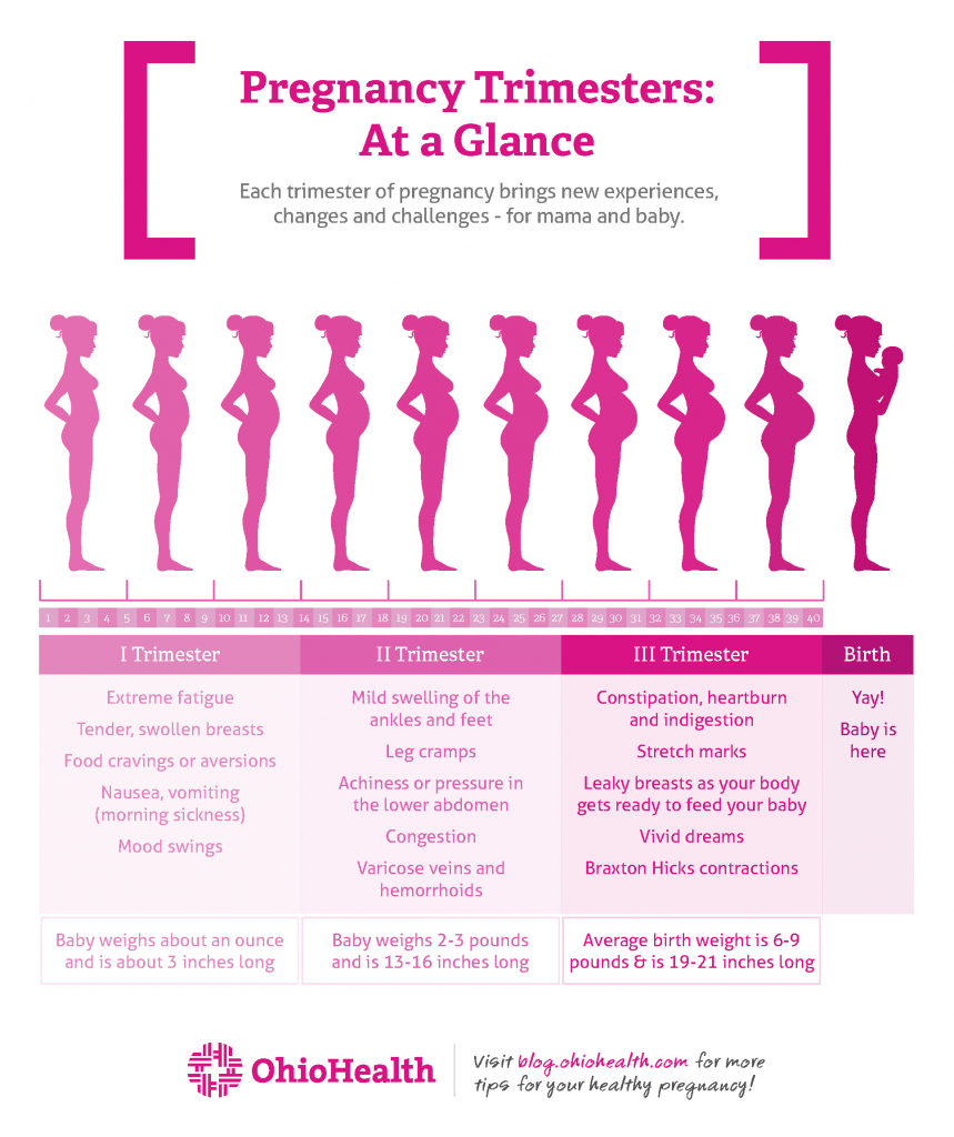 stages of pregnancy trimester ohiohealth pregnancy trimesters weeks chart