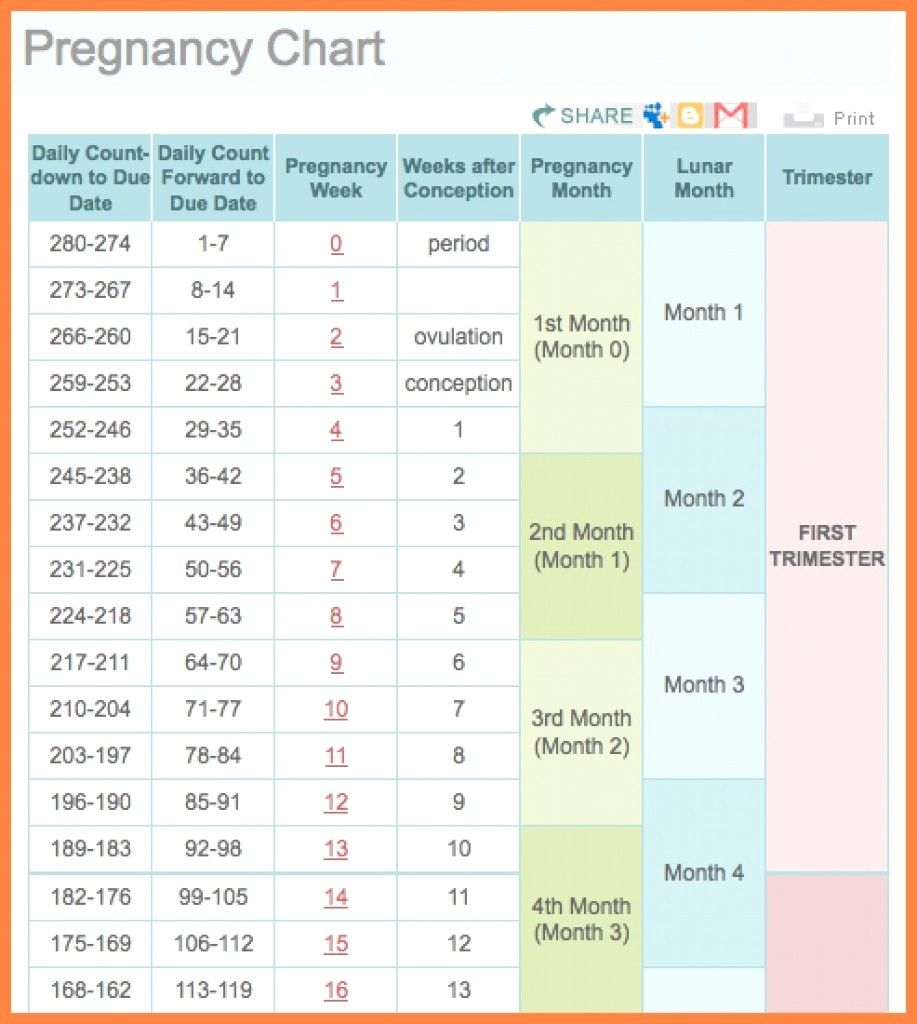 pin on printable free calendar templates printable pregnancy chart with pictures week by week