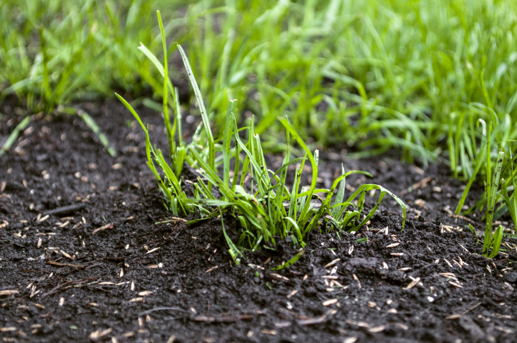 blog when is the best time to sow grass seed in scotland scots october lawn schedule