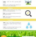 Lawn Care Tips Lawn Seasonal Calendar Best Guide For A Lawn Maintenance Calendar