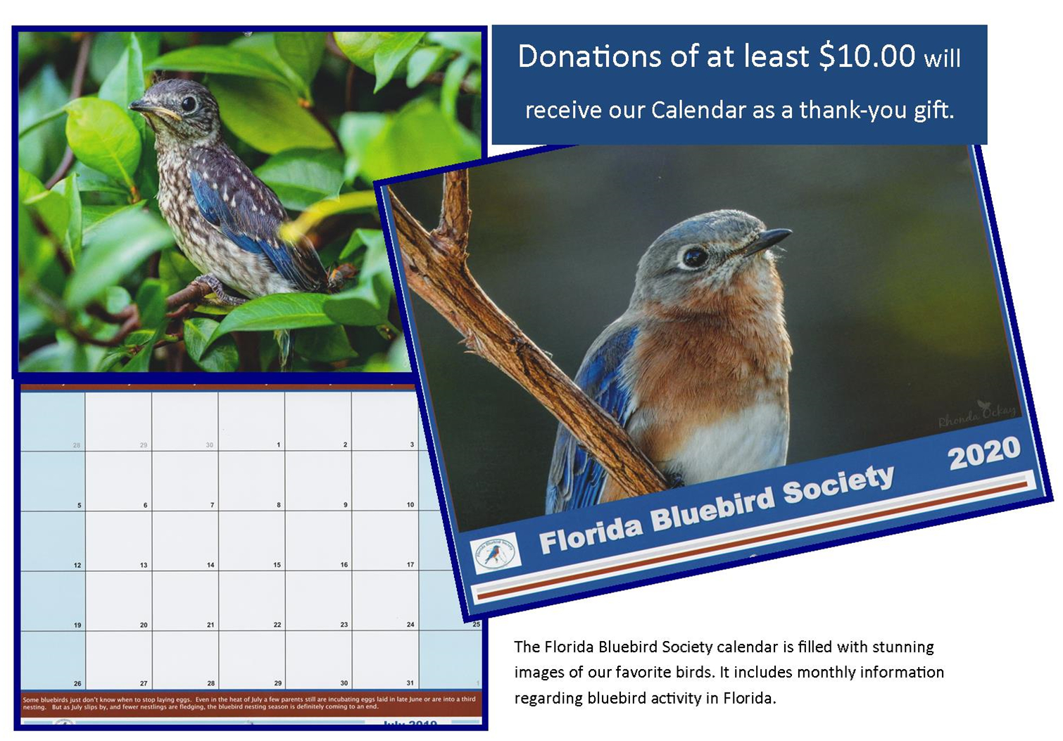 2021 Calendar Contest Florida Bluebird Society