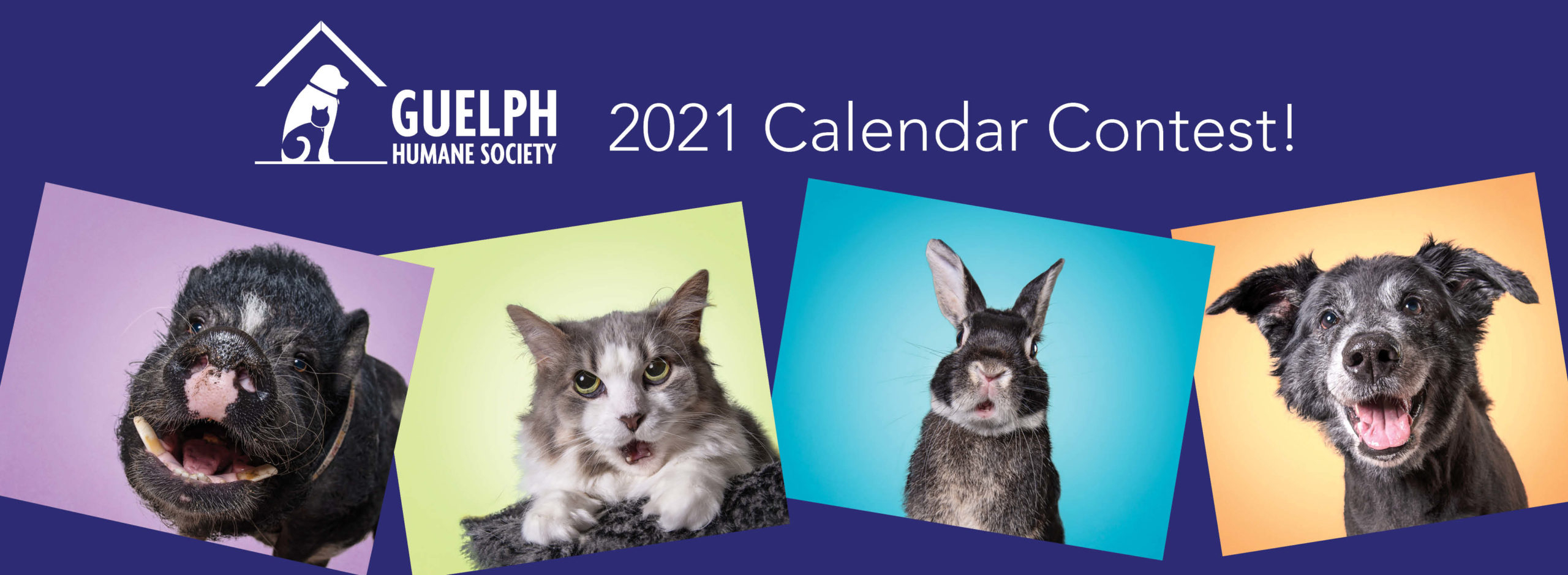 2021 Ghs Calendar Contest Month Of April Guelph Humane