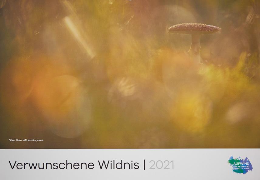 Klaus Tamm Photography Kalender 2021 Verwunschene Wildnis