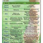 Lawn Maintenance Calendar Calendar Template 2020