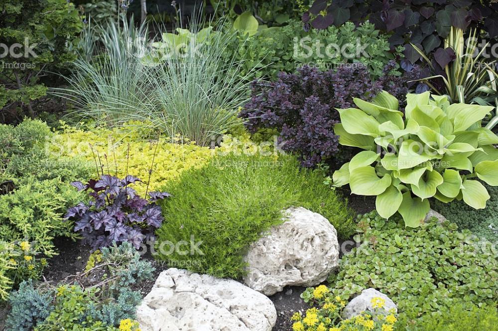 Low Maintenance Landscape Ideas For Front Of House