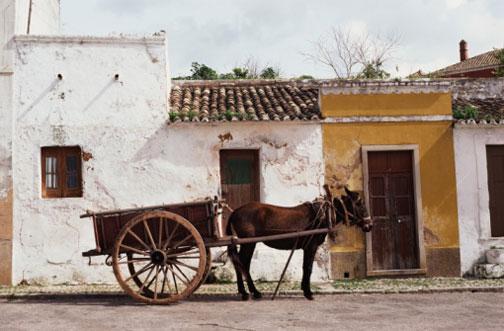Mulas Con Burro New Calendar Template Site