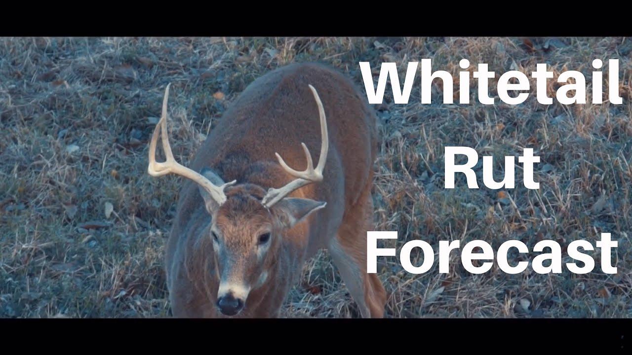 2021 Deer And Deer Hunting Rut Calendar Calendar
