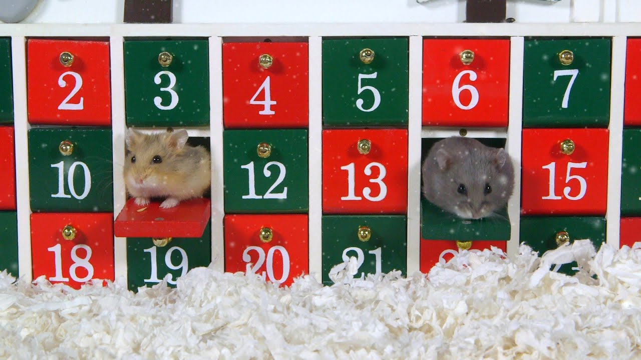 Day 1 Advent Calendar Cute Hamsters 12 Days Of 1